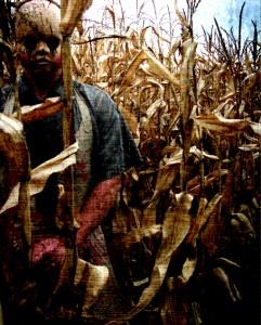 Past-Tense-Corn-Maze